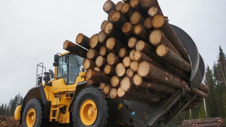 В лесной отрасли Поморья появятся новые кластеры на федеральные средства