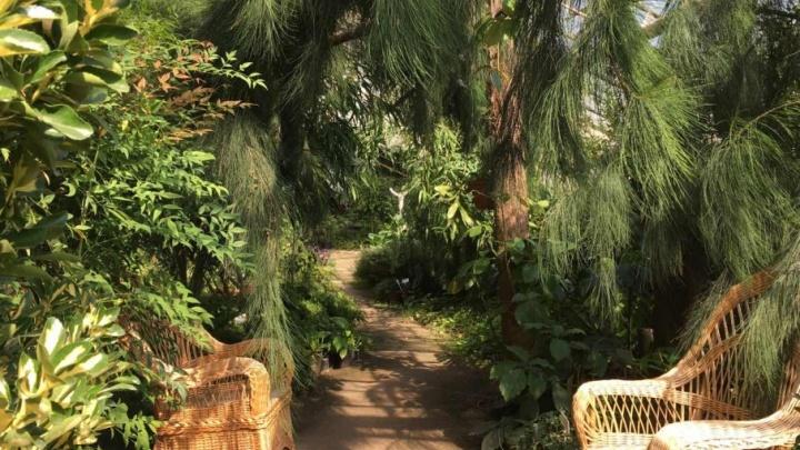 Ботанический сад зовет волгоградцев в тропики с водопадом