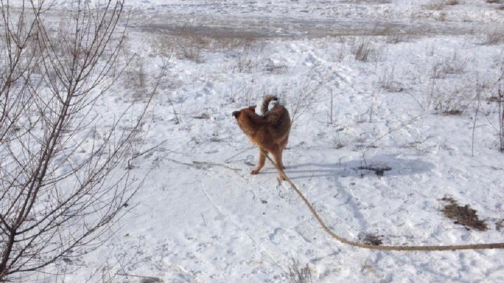Волгоградцы сообща спасли просидевшую две недели в колодце собаку