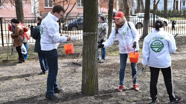 За месяц ярославцы посадили четыре тысячи деревьев