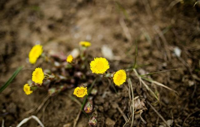 Весна в Ярославле: в городе выросли первые цветы
