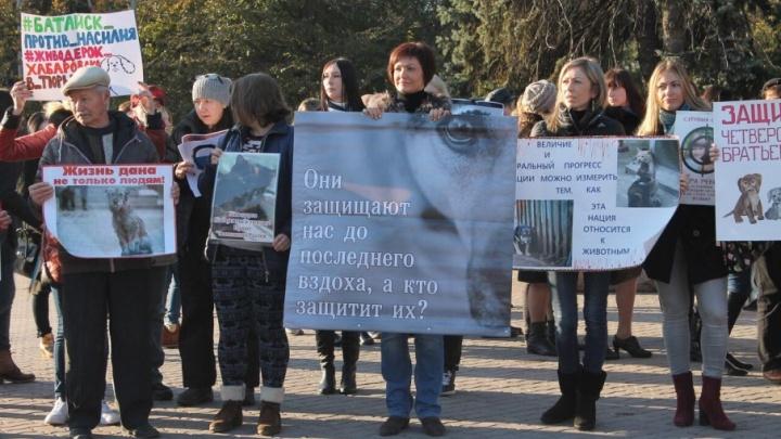 Ростовские зоозащитники организуют «Живую линию» возле приемной Путина