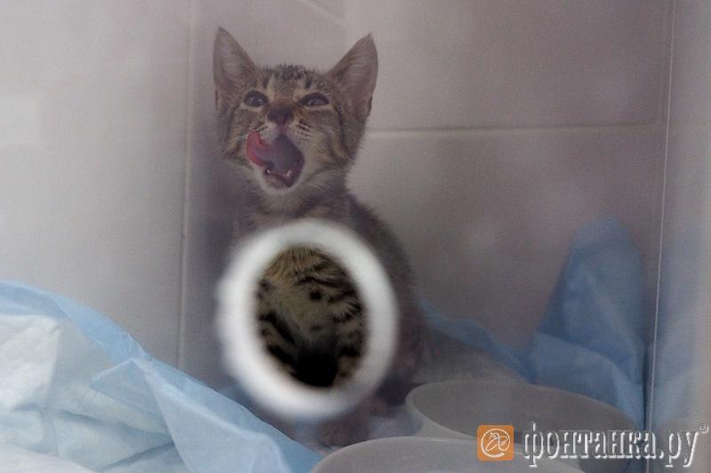 Безымянная кошка