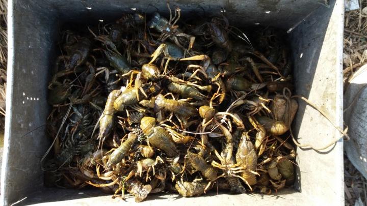 На Волге под Сызранью поймали браконьера на надувной лодке