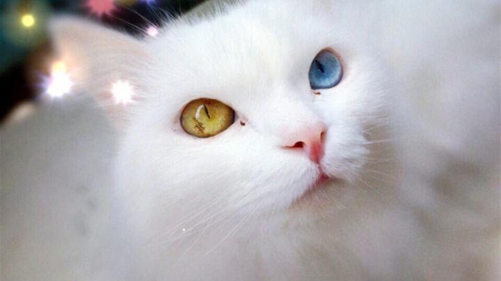 Убойная доза умиления: в День кошек читатели 59.ru поделились фотографиями своих питомцев