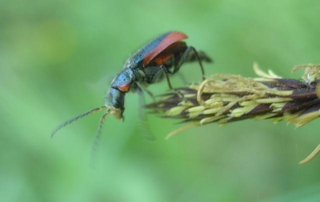 В элеваторе под Волгоградом тысячи тонн зерна испортили трупами насекомых