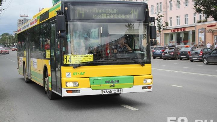 Пермскому автобусу № 14 вернули остановку «Чернышевского»