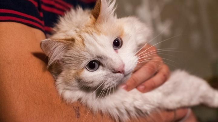 Челябинск — город кошек: «Яндекс» выяснил, каких животных чаще всего ищут в Сети
