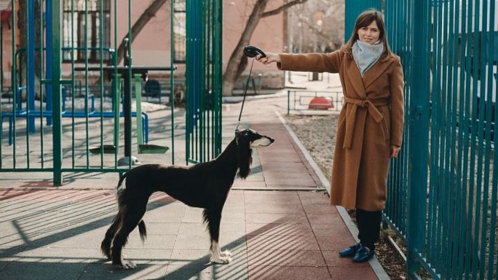 С торчащими ребрами и с собственной статуэткой из фарфора: в Тюмени живет самая титулованная салюки