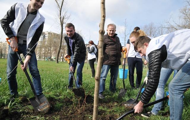В Ростове посадили 120 тысяч молодых деревьев