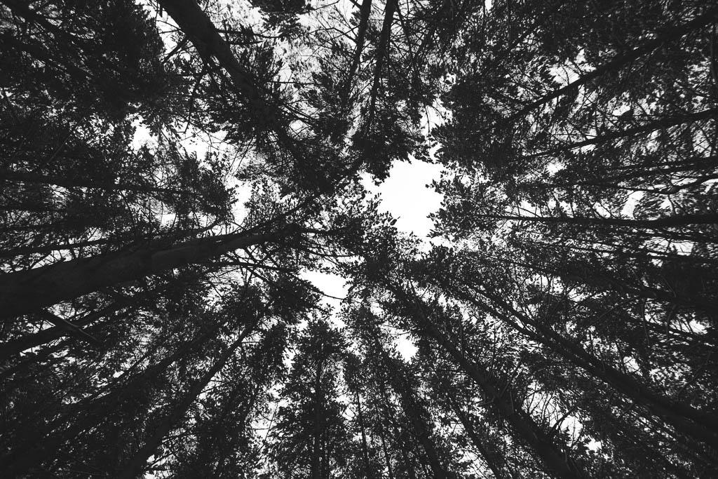 На участке  Старотобольского до Ялуторовского тракта вырубят примерно 27 тысяч сосен и берез