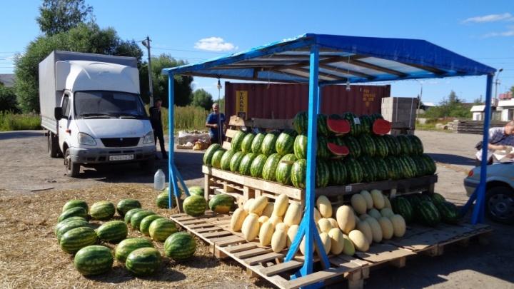 В Ярославской области нашли ларьки, где с нарушениями продавали арбузы и дыни