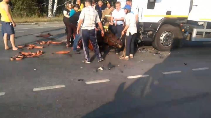 На трассе Тюмень–Омск всадник попал под колеса грузовика и легковушки