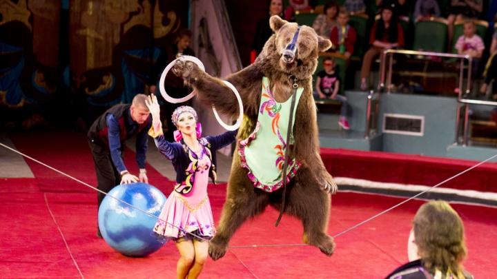 Медведь-акробат и обезьянки-наездники: в Ярославль приехал цирк зверей