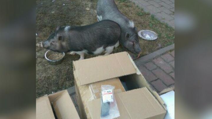 Звери — не люди: как во время пожара в «Вернисаже» спасали животных из контактного зоопарка