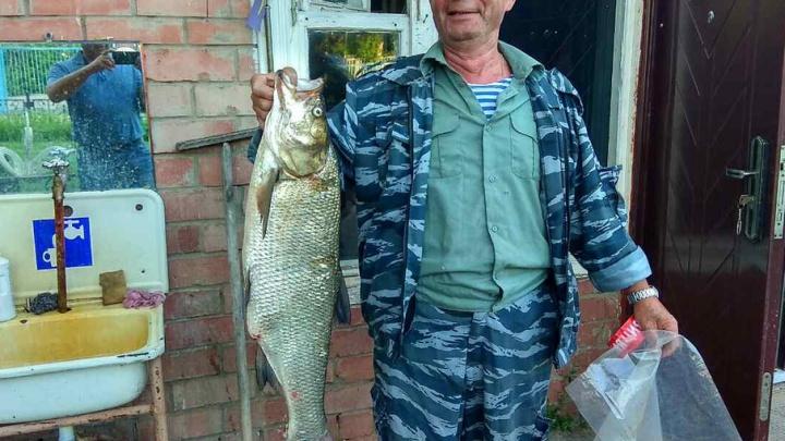 Сторож тольяттинской турбазы поймал на блесну жереха весом шесть килограммов
