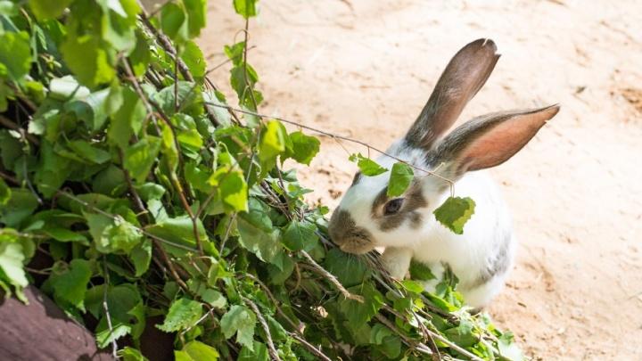 В Ярославской области построят первый кролиководческий комплекс
