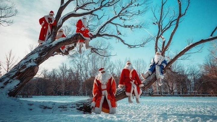 Слёт Дедов Морозов, световые столбы и поцелуй медведя: выбираем лучшее фото дня на E1.RU за декабрь