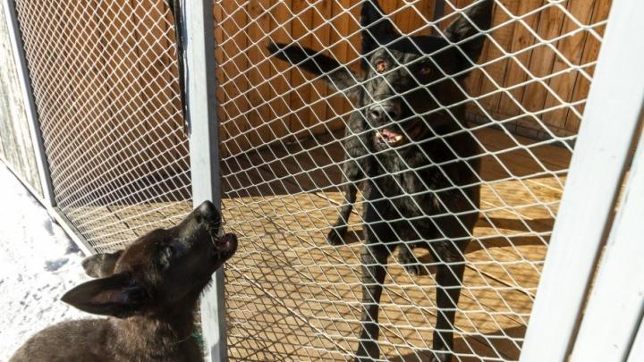 «Ухожены и накормлены»: в «ГорЭкоЦентре» рассказали о собаках, попавших в питомник