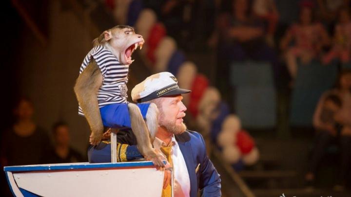 Новый уровень: Тюменский цирк презентует уникальную программу с животными