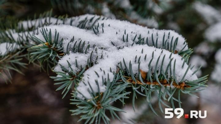 Снегопады и сильный ветер: МЧС предупредило об ухудшении погоды в Прикамье