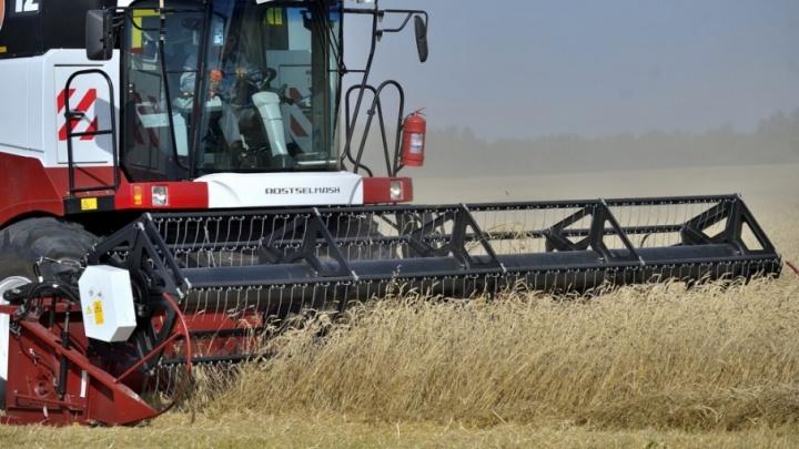 «Равис» убирает хлеб опережающими темпами благодаря солидным инвестициям в сельское хозяйство