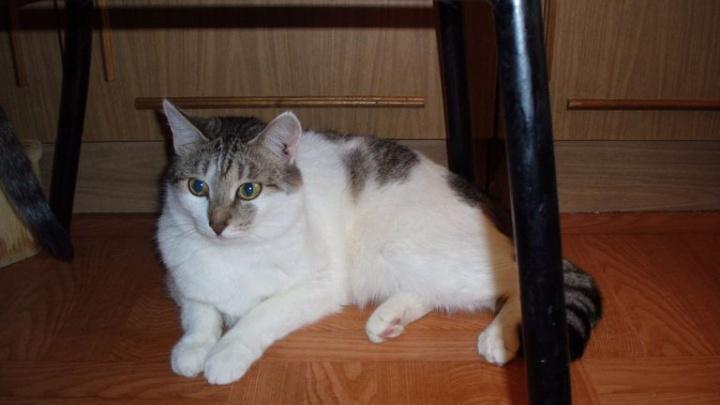 Потеряла голову от любви: в Сызрани спасатели успокаивали озверевшую кошку