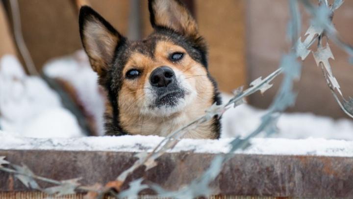 С новым пёсом! 12 историй собак из самарского приюта, которые мечтают найти хозяев