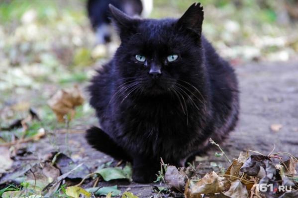 Кот стал жертвой неприязни мужчины к соседке