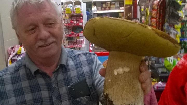 Житель Златоуста нашел в лесу огромный гриб