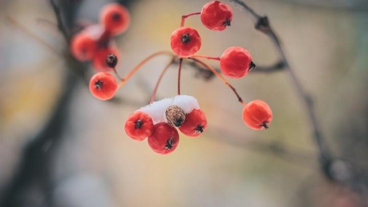 Новая рабочая неделя принесет ростовчанам снег и морозы