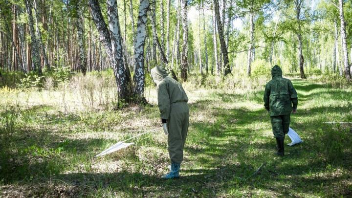 На Южный Урал пришла вторая волна клещевого энцефалита