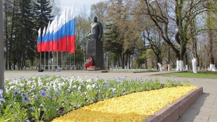 В Ярославле будут следить за теми, кто крадёт цветы с клумб
