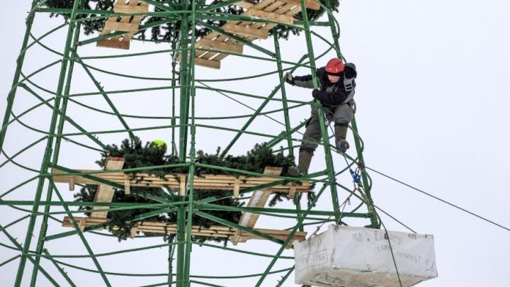 «У вас есть три дня!»: мэр потребовал убрать из Ярославля новогодние ёлки