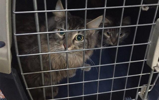 В Самаре женщина оставила в квартире после выселения 25 кошек и попугая
