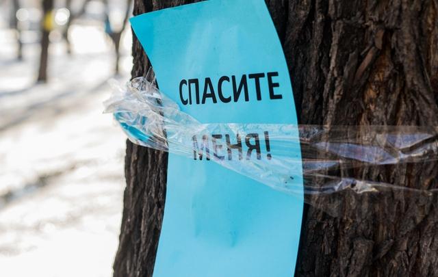 В Самарской области на территории памятника природы незаконно вырубили 28 дубов