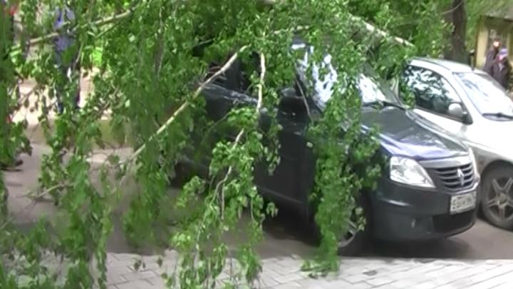 В Ярославле береза раздавила два автомобиля: фото