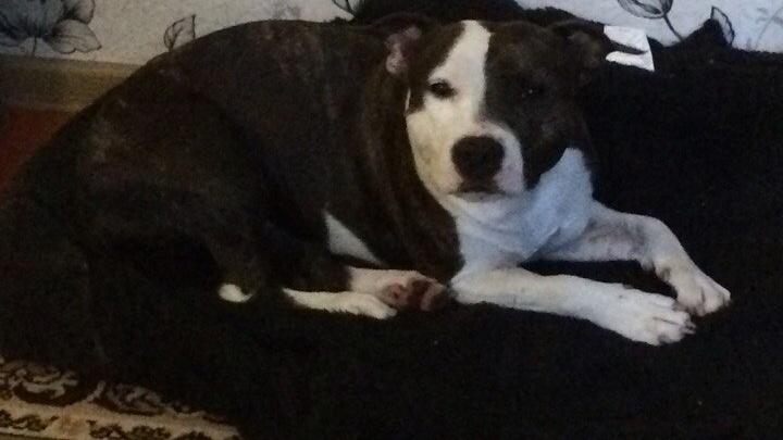 Собаку убийцы разведчика приютила семейная пара из Красноармейского района