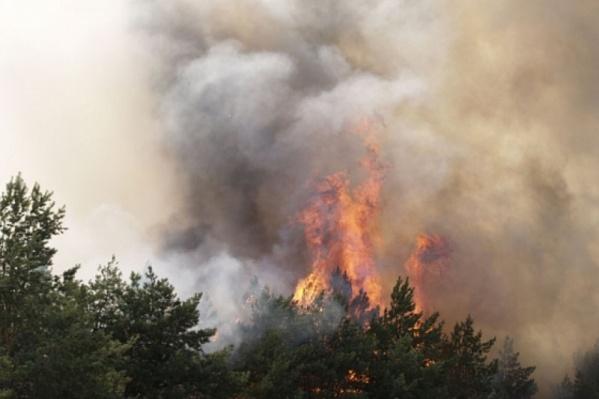 Пожары в Волгоградской области попали в ленты федеральных новостных агентств
