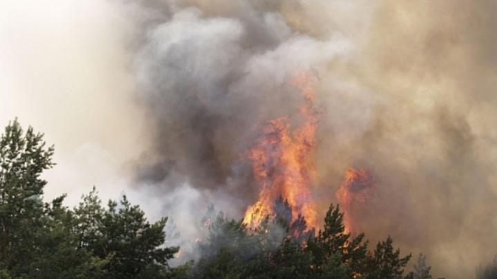 Под Волгоградом пожарные спасли от огня хутор Каменный