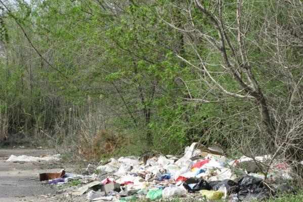 Лесополосы у Волгограда оказались очень удобны для сброса мусора