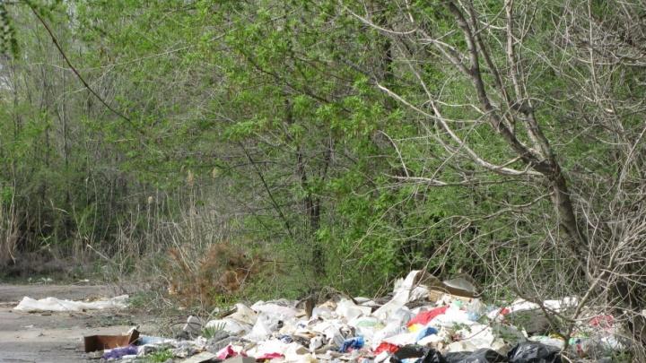 Волгоградцев зовут в лесополосы на сбор мусора и валежника перед ЧМ-2018