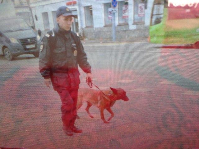 Кинологи с собаками будут прочесывать здания