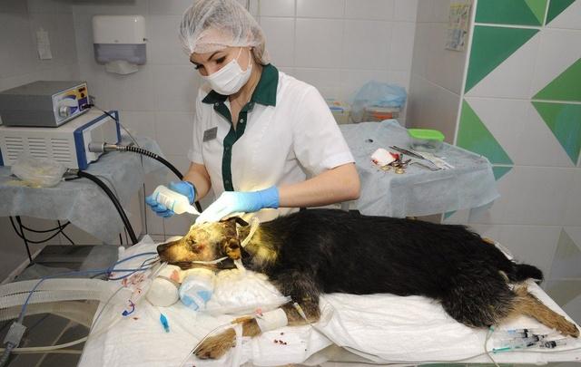 Волгоградские врачи спасли щенков подстреленной живодером собаки