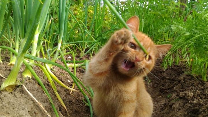 Ева, Шнурик, Муся и многие другие: пермяки делятся фотографиями своих котиков