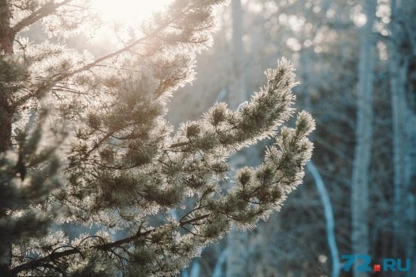 Грядущие выходные порадуют тюменцев зимним теплом