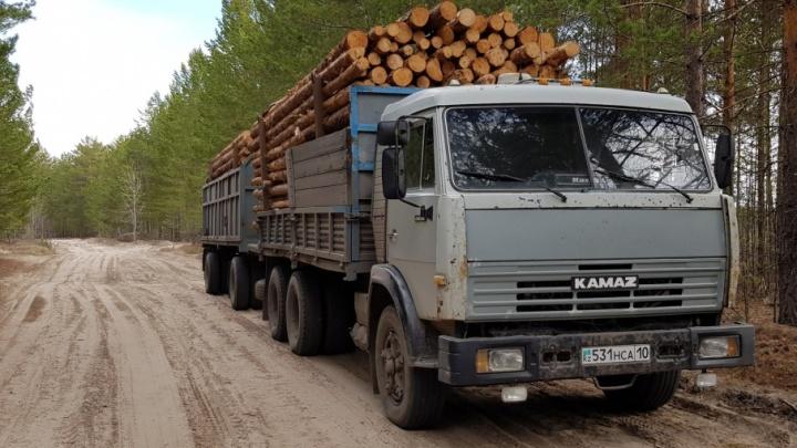 В лесу у деревни Криводанова массово вырубают деревья: разбираемся, законно или нет