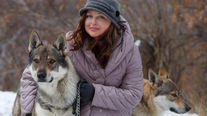 В Краснооктябрьском районе Волгограда волки стали друзьями человека