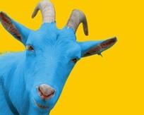 Синяя коза сбила цены?