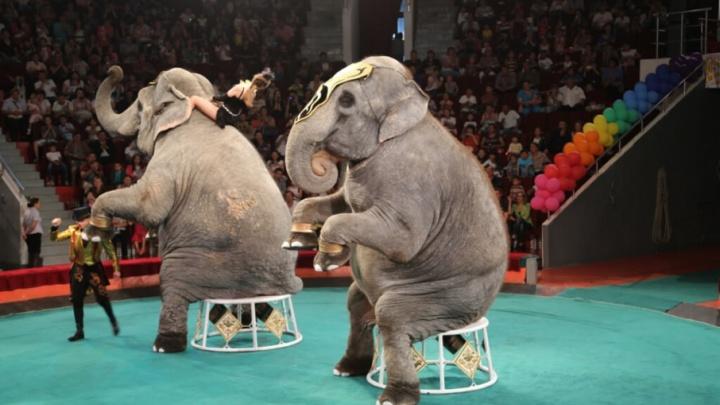 В Самаре выступят Дженни и Магда — звезды Большого Варшавского цирка
